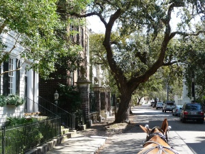 On the carriage ride through the historic district of Charleston