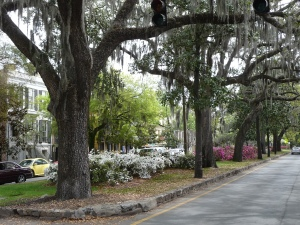 A typical street in Savannah. Just lovely.