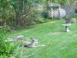 lounging deer