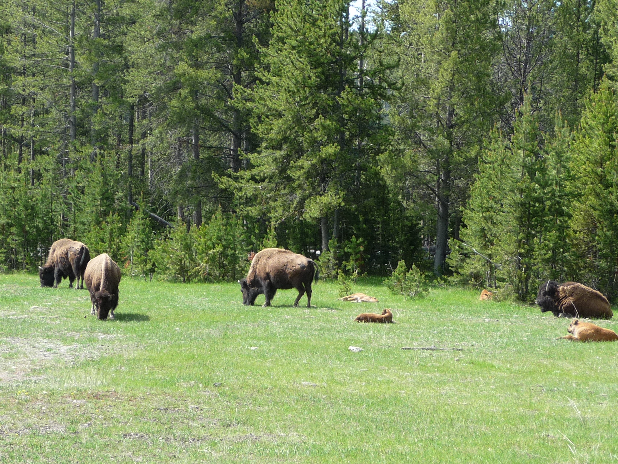Motorhome to yellowstone day six more mizsuzee 39 s musings for Bison motors great falls